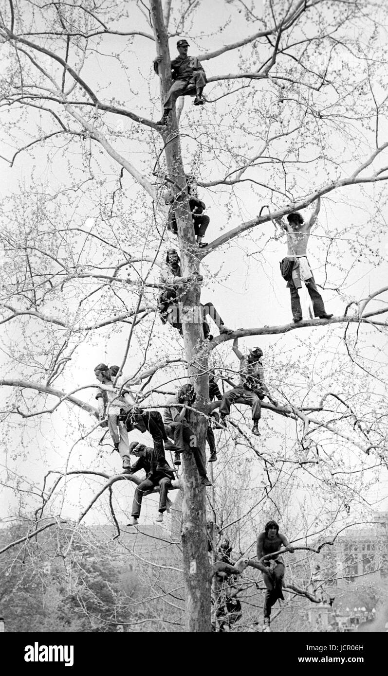 Lt. John Kerry speaks to antiwar protestors - here listening from a tree on the U.S. Capitol grounds during massive - Stock Image