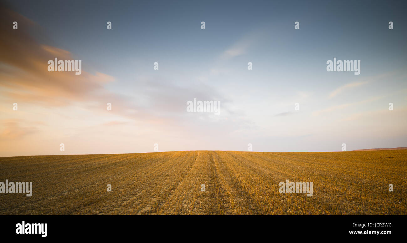 Minimalist landscape with Meadow wheat field after harvesting during sunset with moving orange clouds - Stock Image