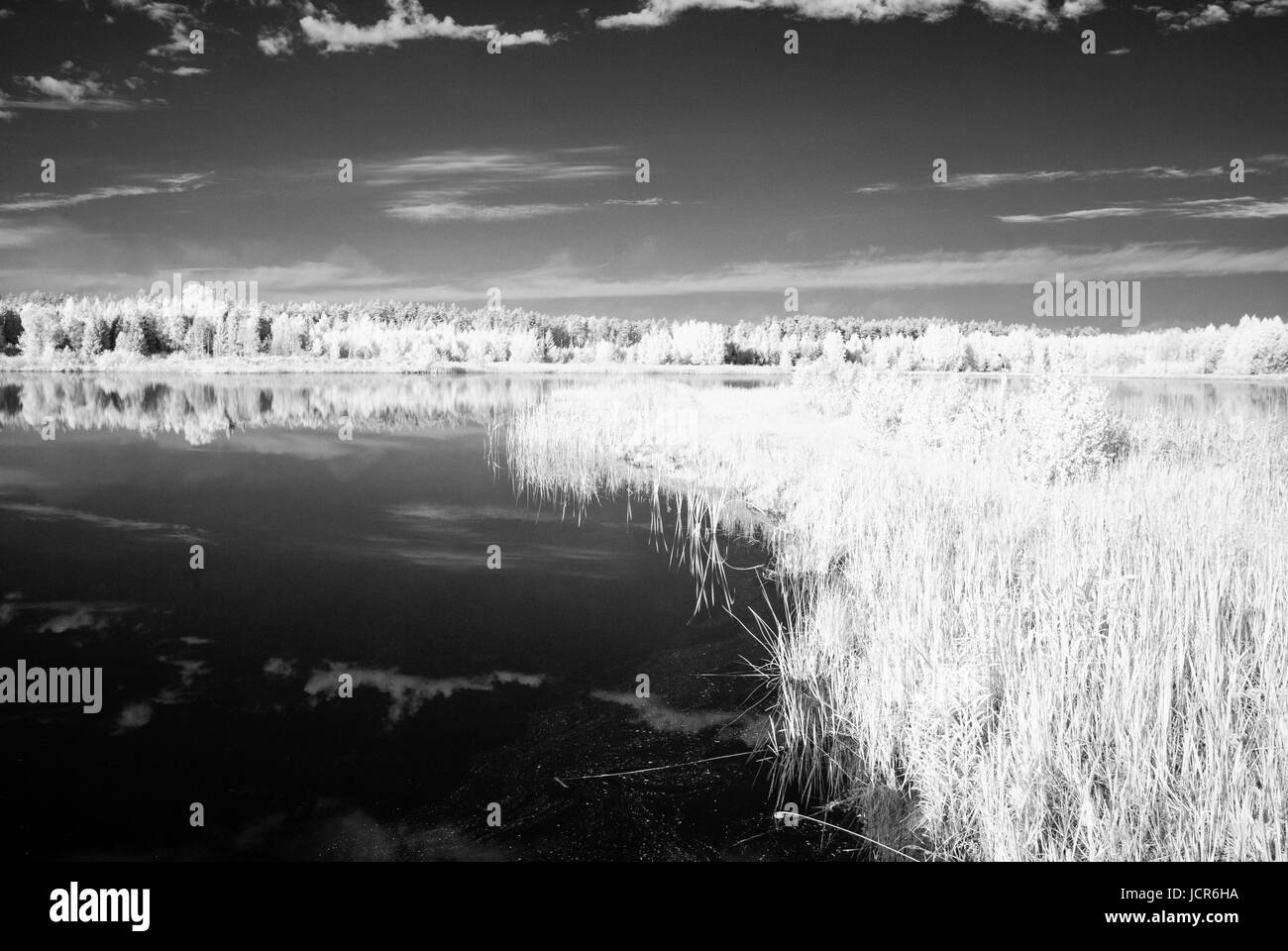 forest lake in hot summer day in countryside. infrared image - Stock Image