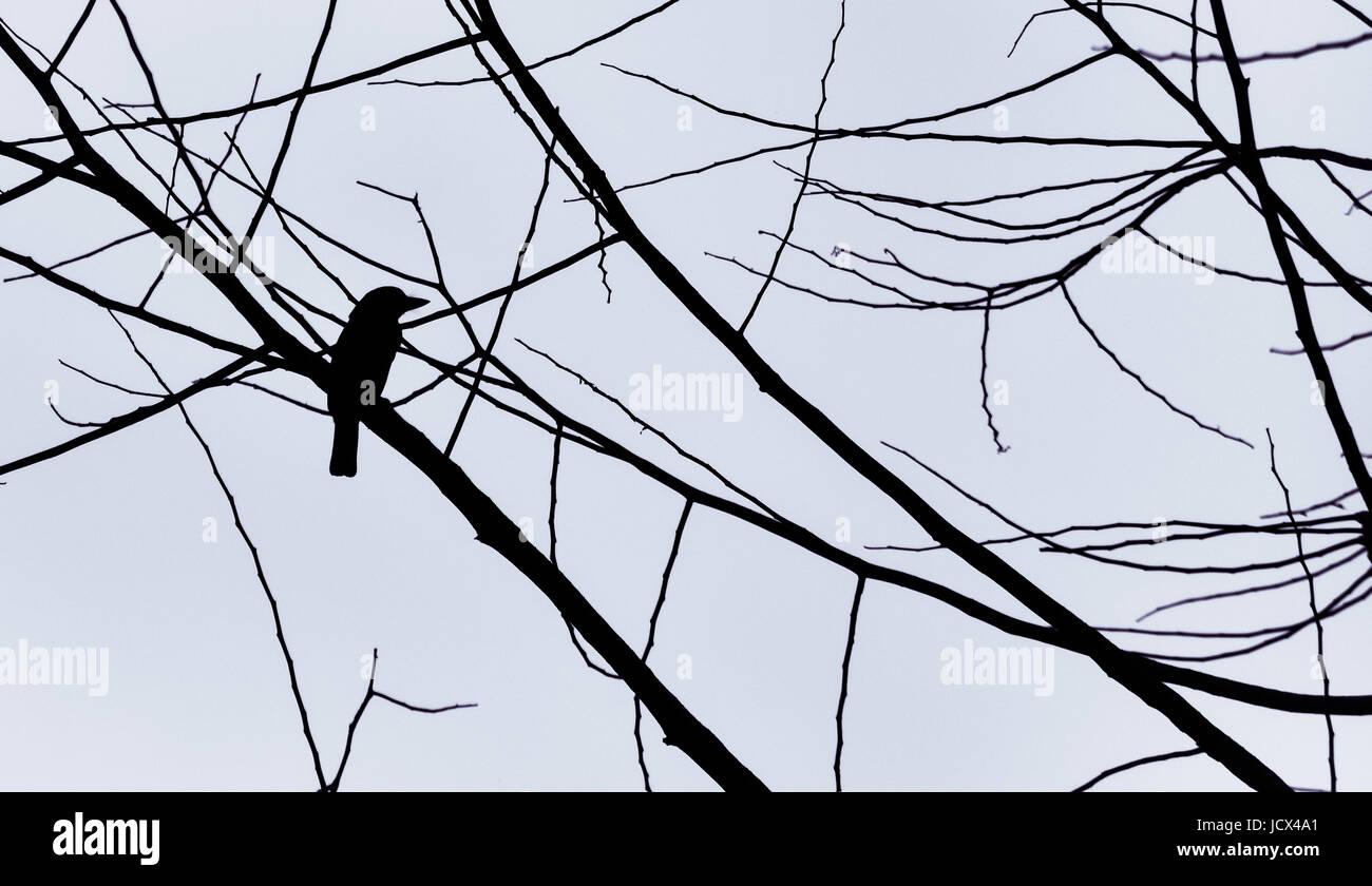 Bird silhouette against grey sky. - Stock Image