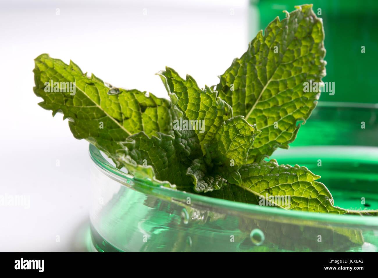 Plant pathology - Stock Image