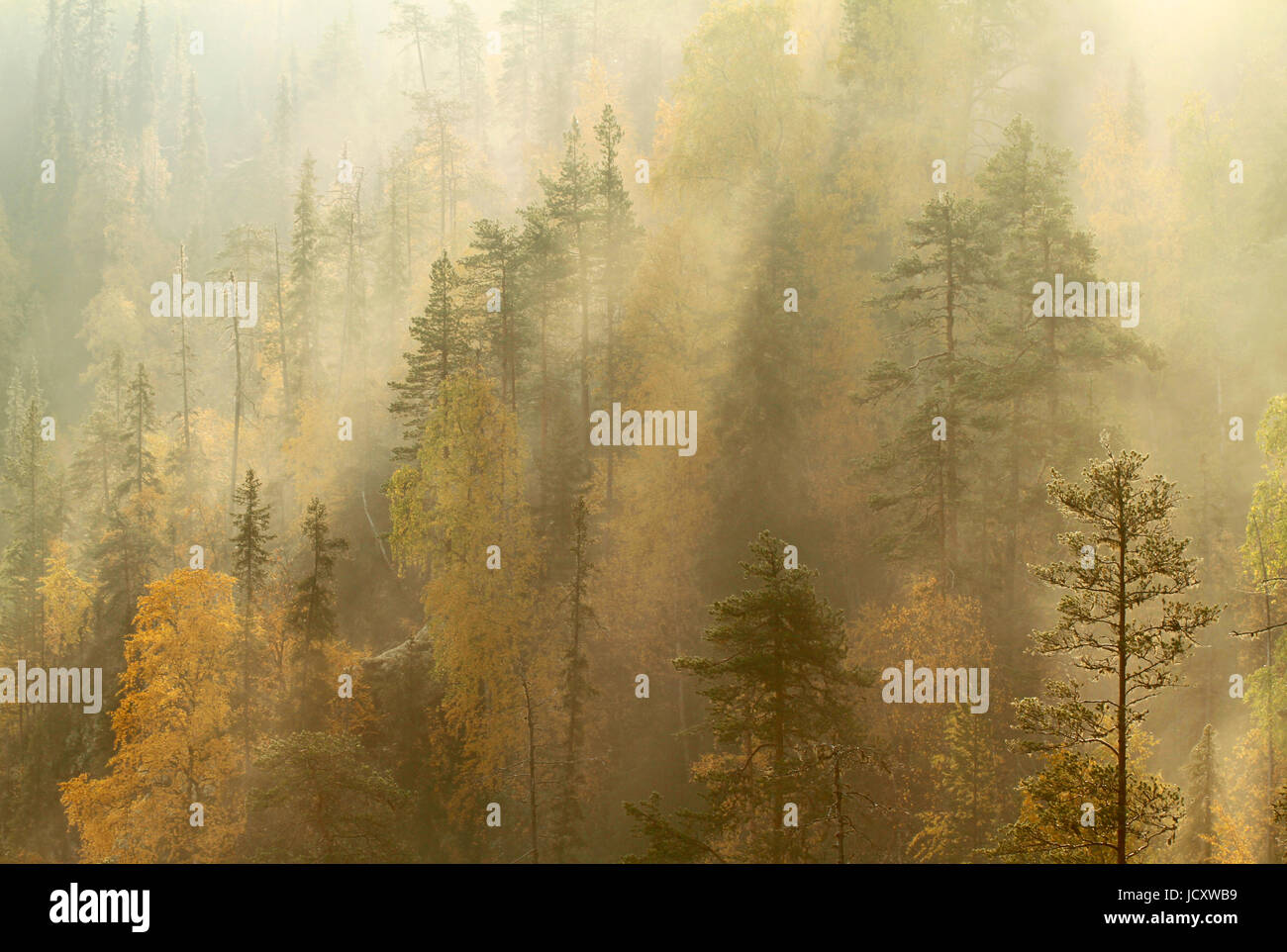 Autumn morning mist rolling over taiga forest in Oulanka national park, Kuusamo, Finland. - Stock Image