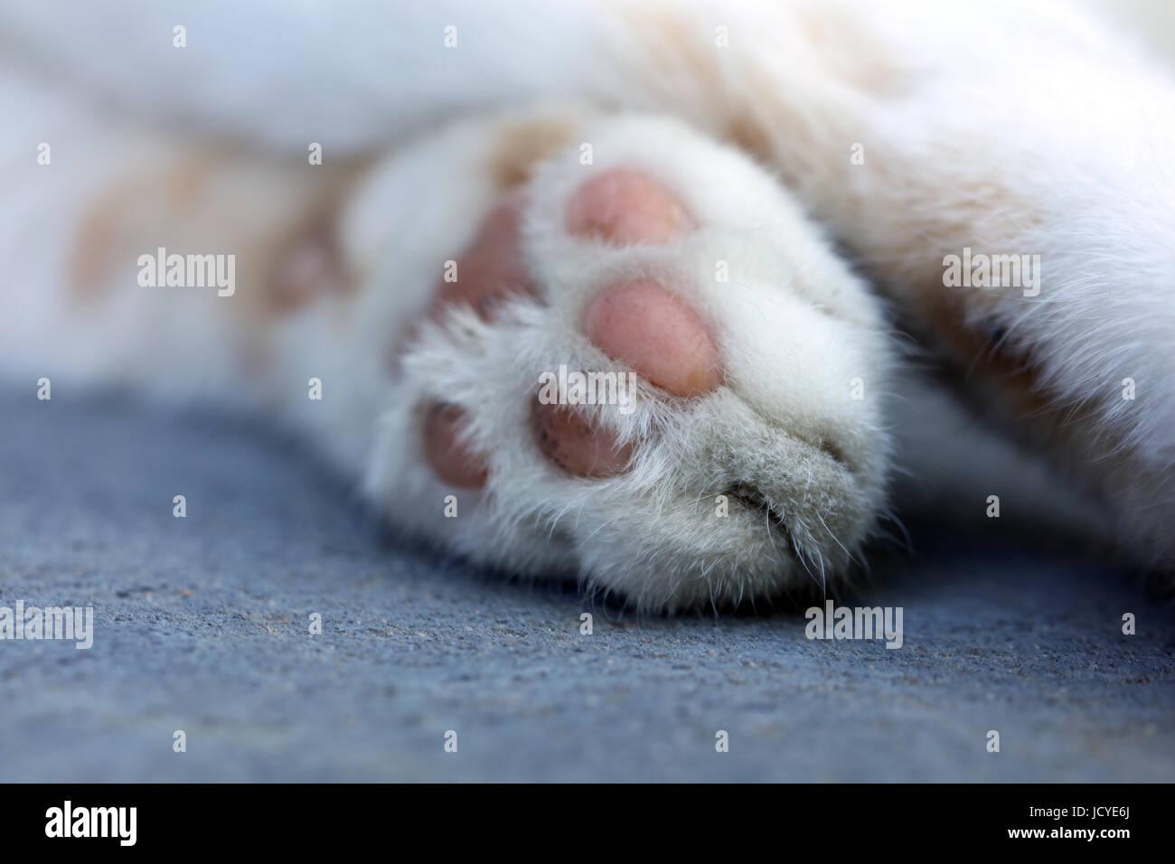 Katzenpfote Stock Photo