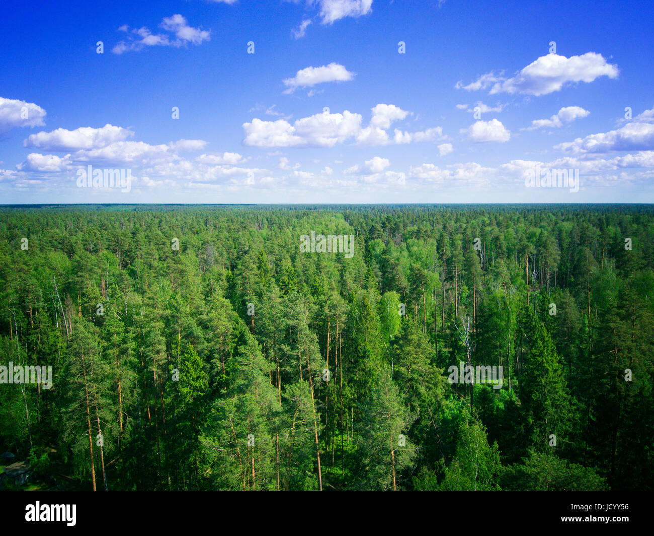 Pine Trees Photo From Drone Aerial Landscape With Sky And Clouds