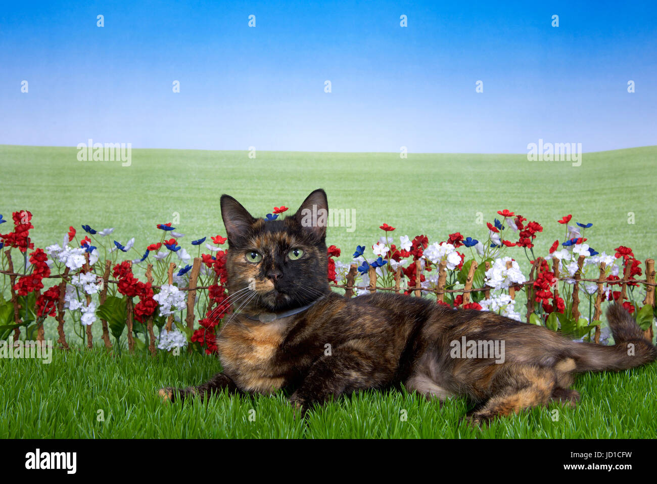 Tortie torbie tabby cat laying in green grass back yard setting, stick fence with red, white, blue flowers behind Stock Photo