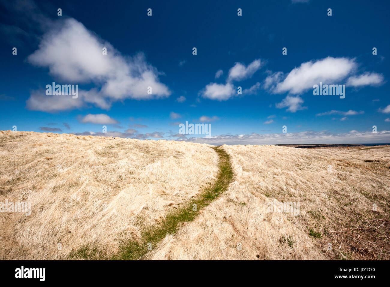 Trail through upland barrens at Cape St. Mary's Ecological Reserve, Cape St. Mary's, Avalon Peninsula, Newfoundland, - Stock Image