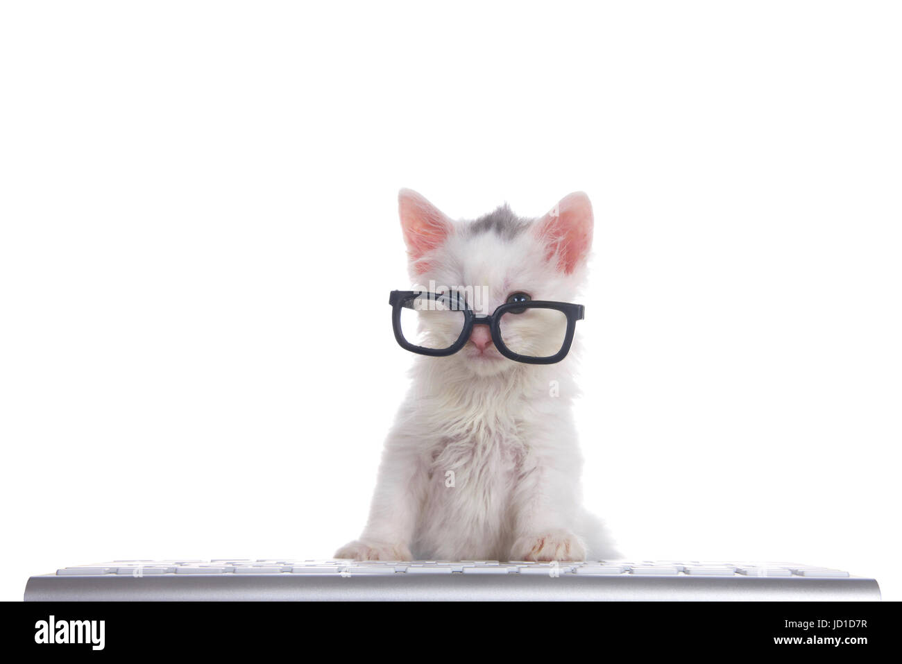 One cute adorable fluffy white kitten wearing black geeky glasses looking over the glasses slightly to viewers left, - Stock Image