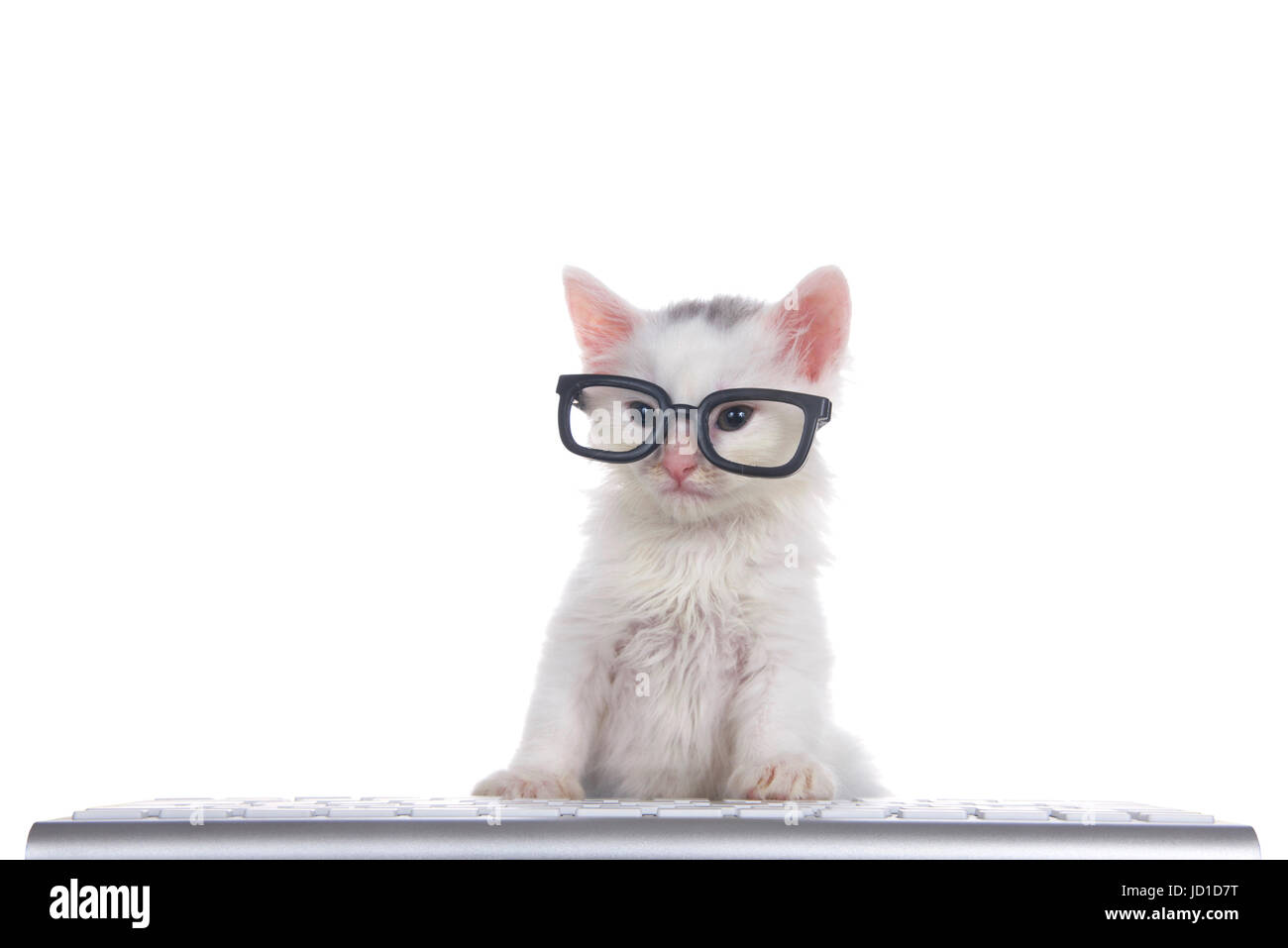 One cute adorable fluffy white kitten wearing black geeky glasses looking slightly to viewers left, sitting in front - Stock Image
