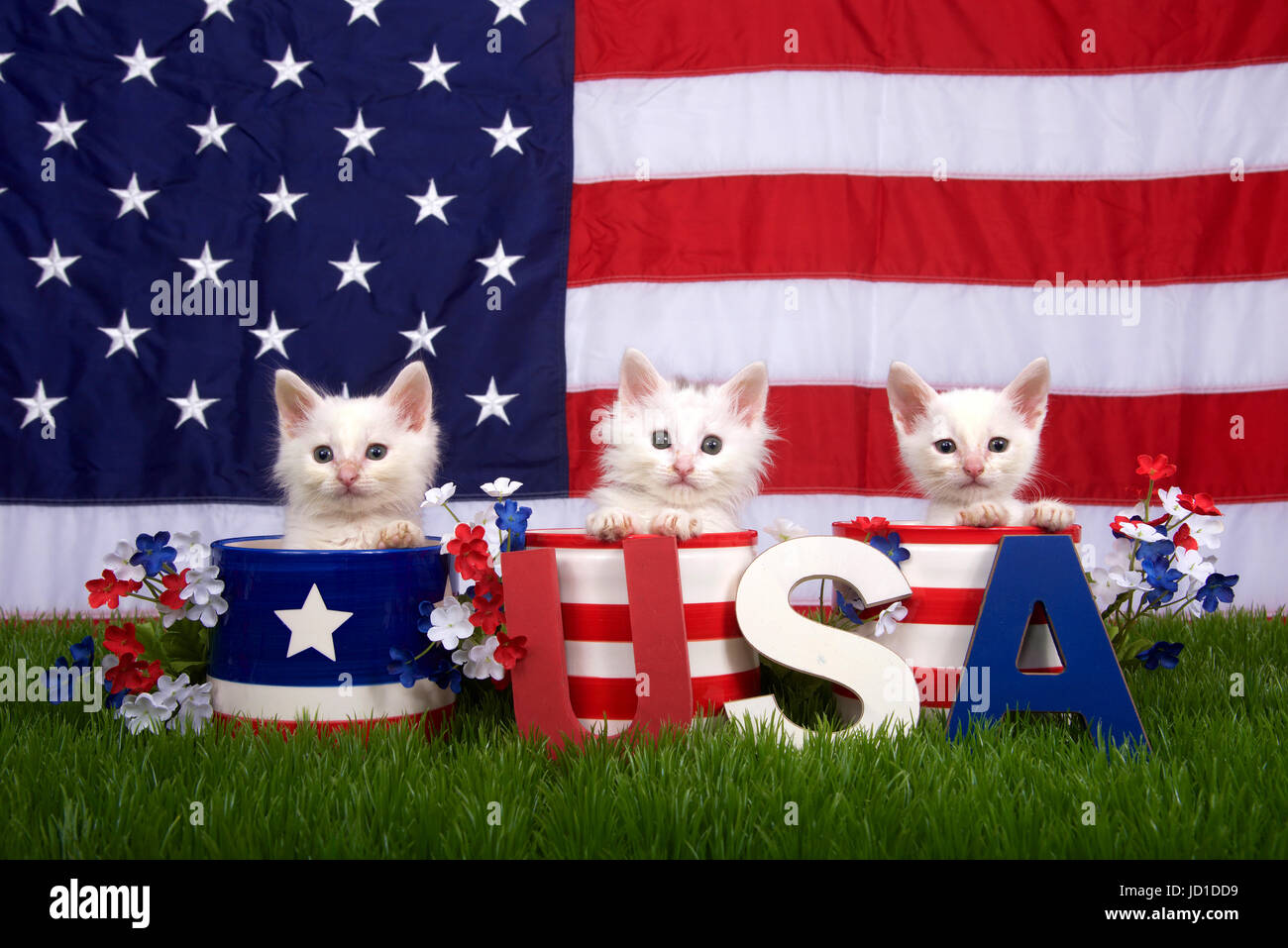 8338d6546dc5 Three fluffy white small kittens sitting in patriotic designed pots on  green grass