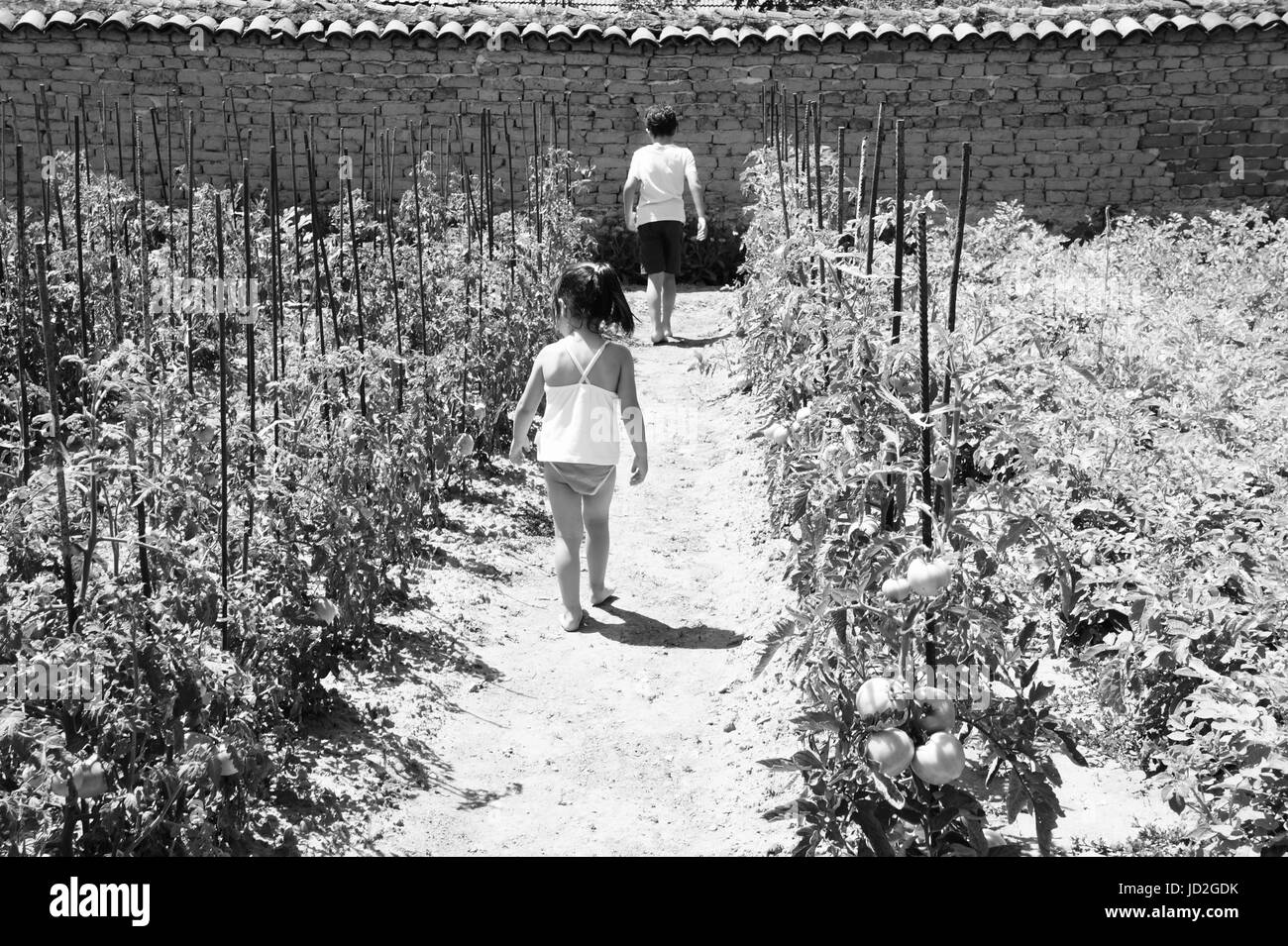 A little girl and a boy walking on a garden path checking out for ripe tomatoes. - Stock Image