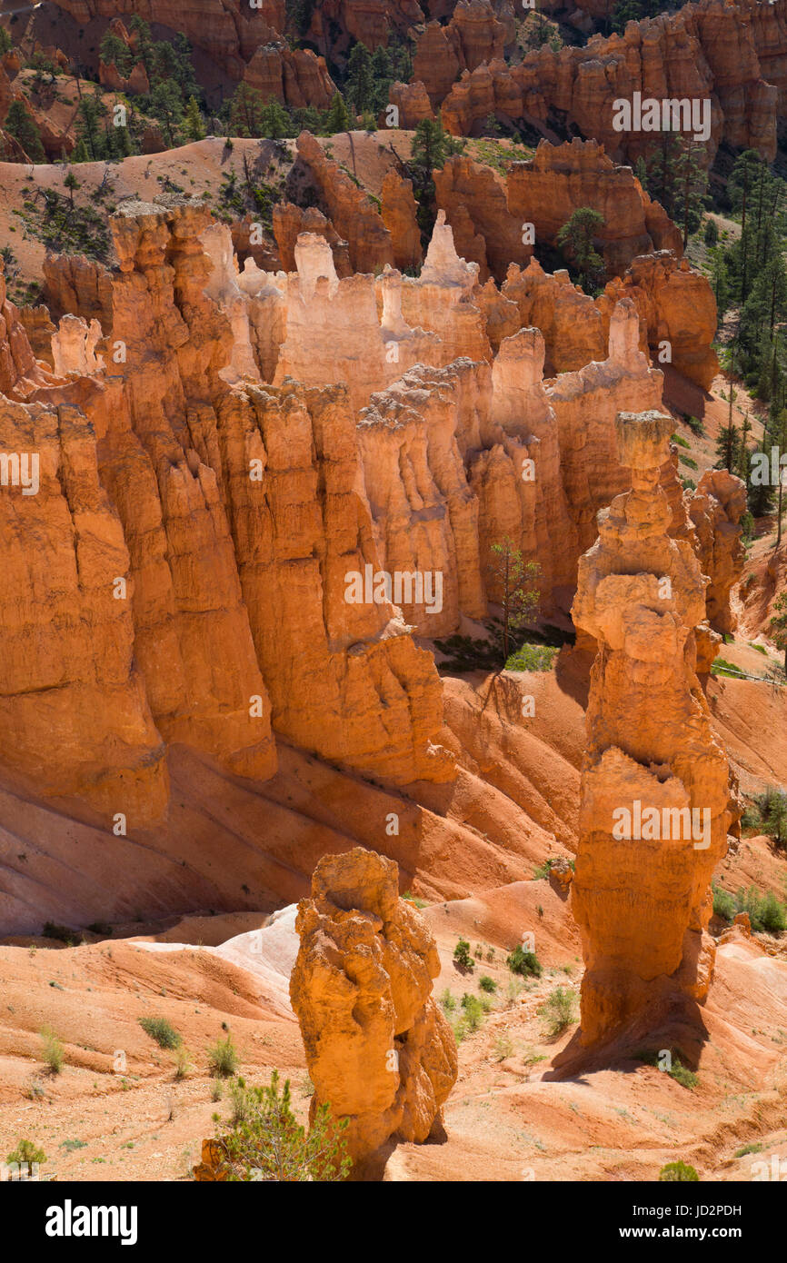 On the Queens Garden Trail, Bryce Canyon National Park, Utah, USA - Stock Image