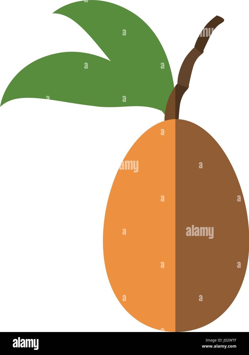 Tree tomato fruit - Stock Vector