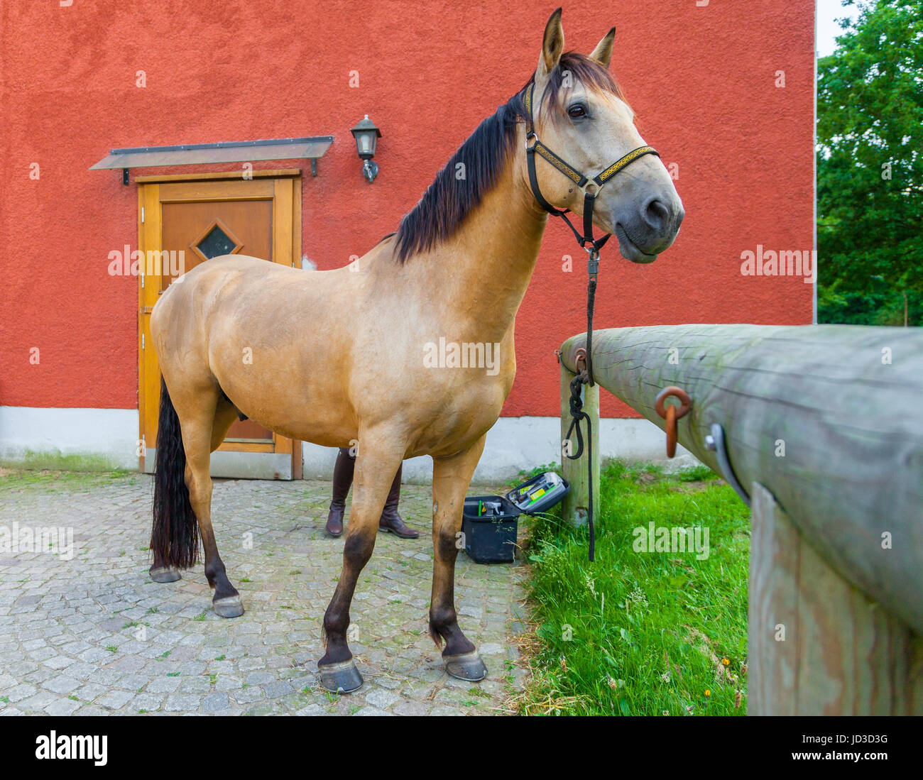 a brown horse stands on a farm - Stock Image