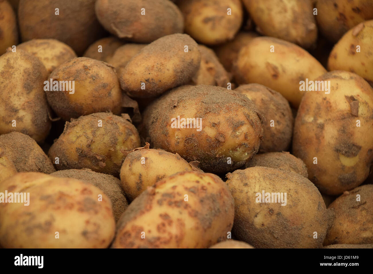 Heap of new farm potato with ground at retail market display close up, low angle view - Stock Image