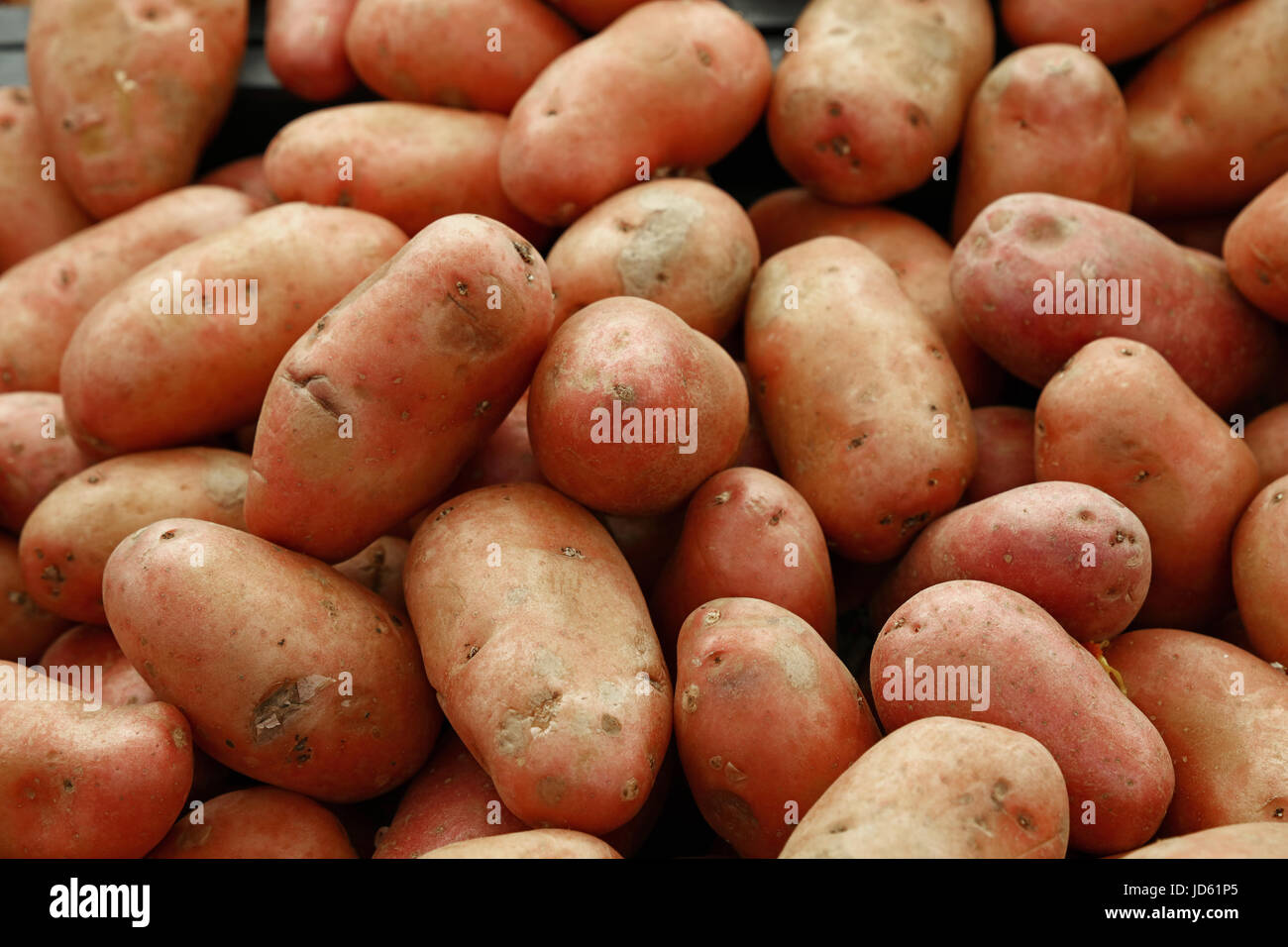 Heap of washed pink new farm potato at retail market display close up, high angle view - Stock Image