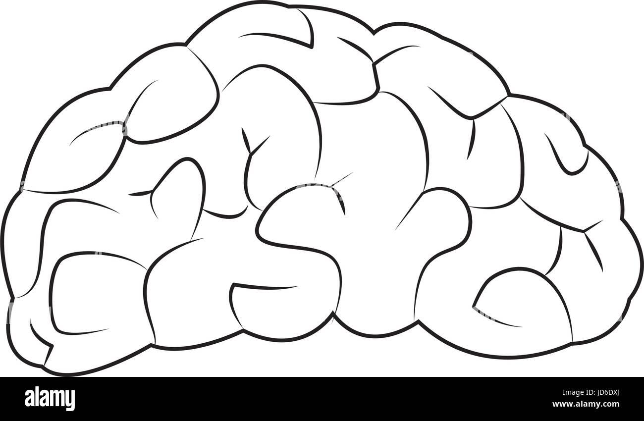 human brain for medical health design - Stock Image
