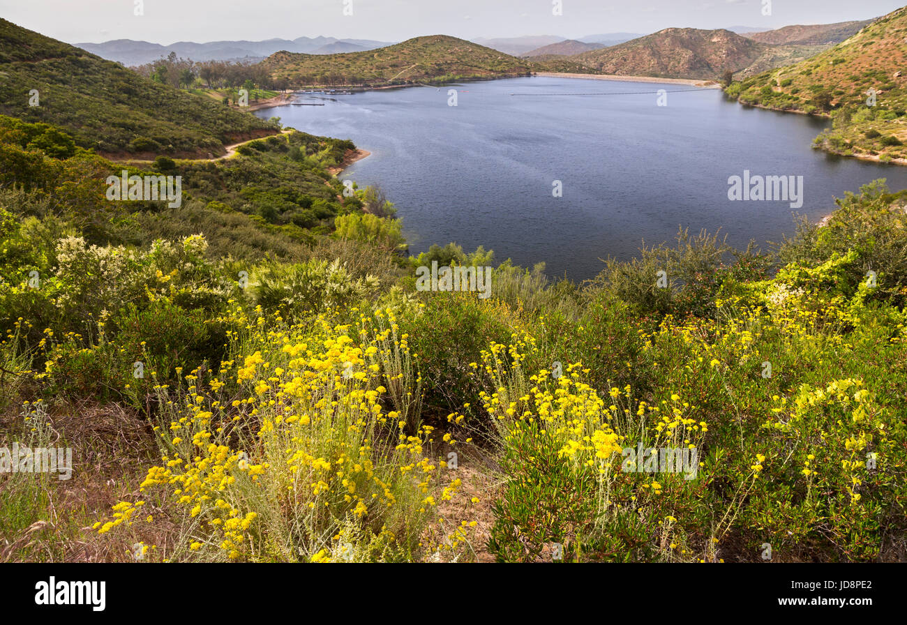 Spring Wildflowers blooming on hiking trail around inland Lake Poway east San Diego County California United States - Stock Image