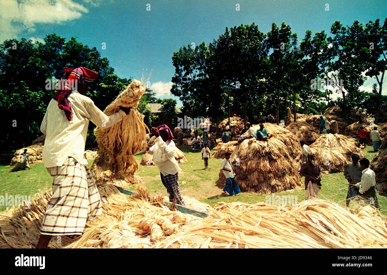 jute called the golden fibre of bangladesh are selling this market once a week for storing government  stores to Stock Photo