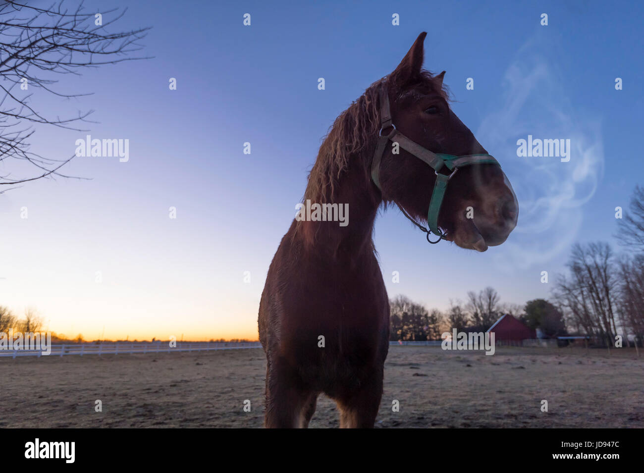 Horse Breath Cold Winter Morning - Stock Image