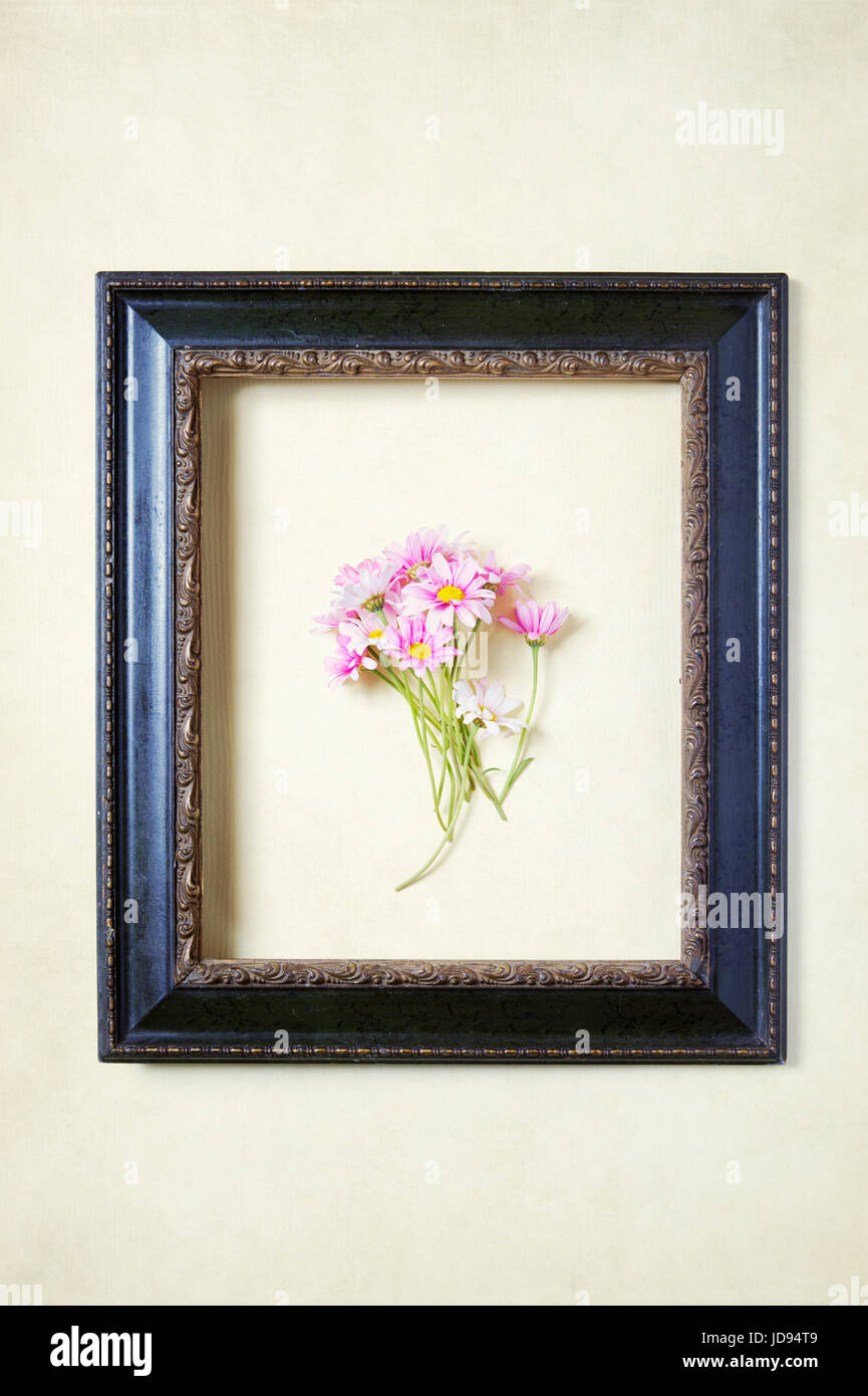 Daisies Within a Frame - Stock Image