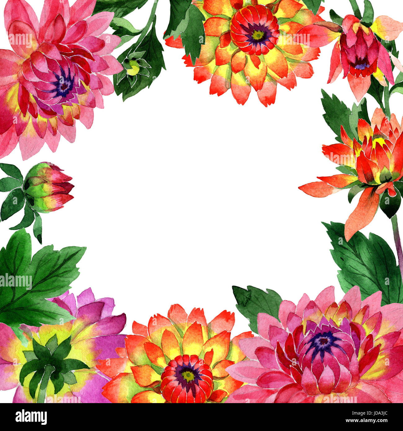 Wildflower Dahlia Flower Frame In A Watercolor Style Isolated Aquarelle Wild For Background Texture Wrapper Pattern Or Border
