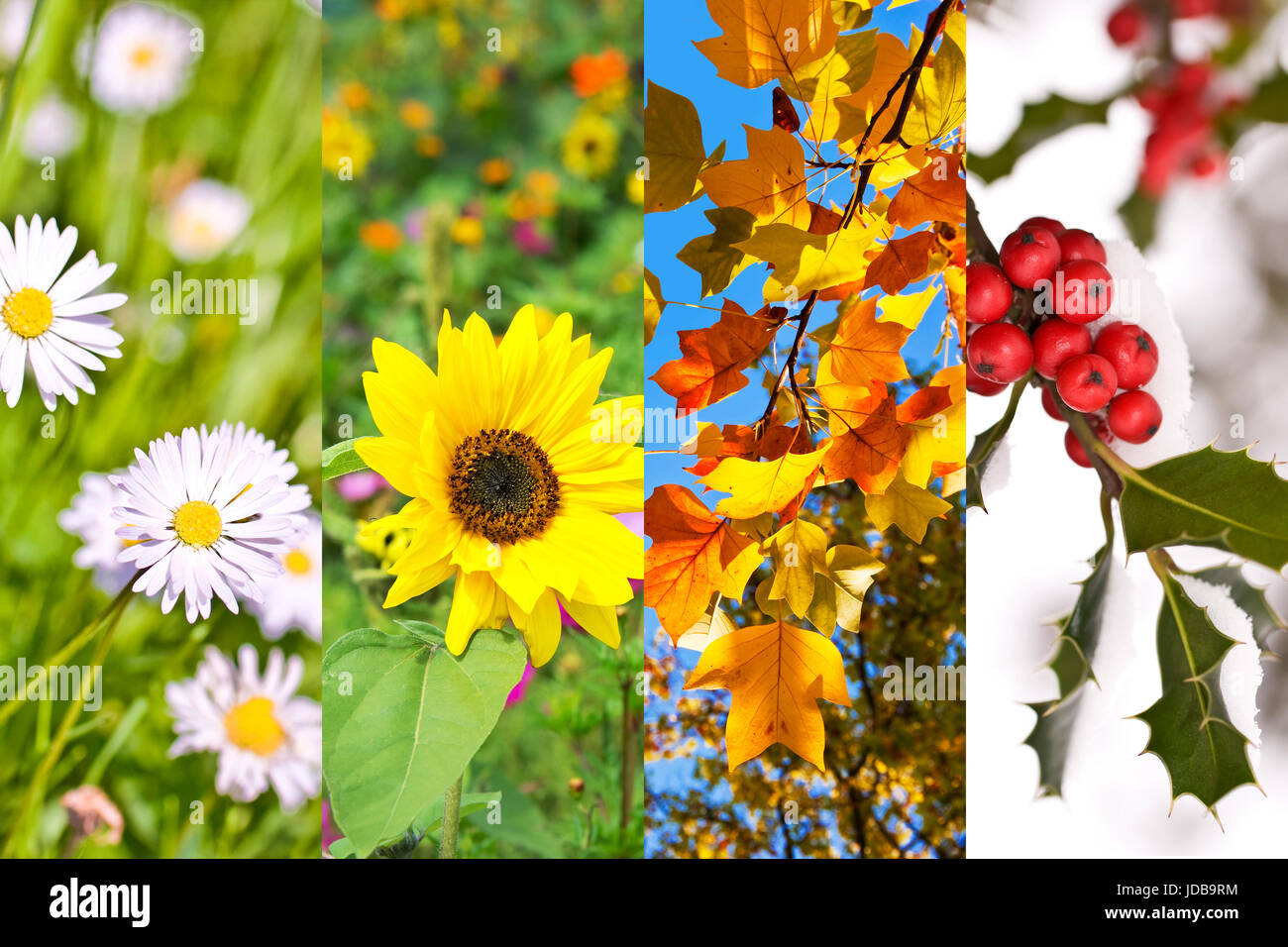 Plants and flowers in spring, summer, autumn, winter, photo collage, four seasons concept - Stock Image