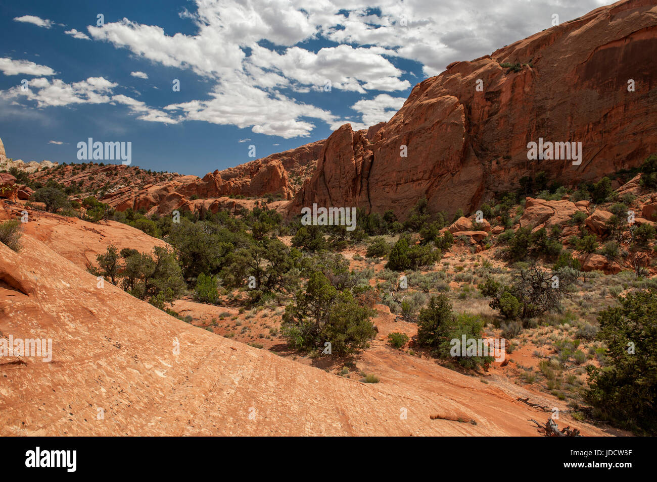Lower Muley Twist Canyon, as seen from the trailhead in Capitol Reef National Park, Utah - Stock Image