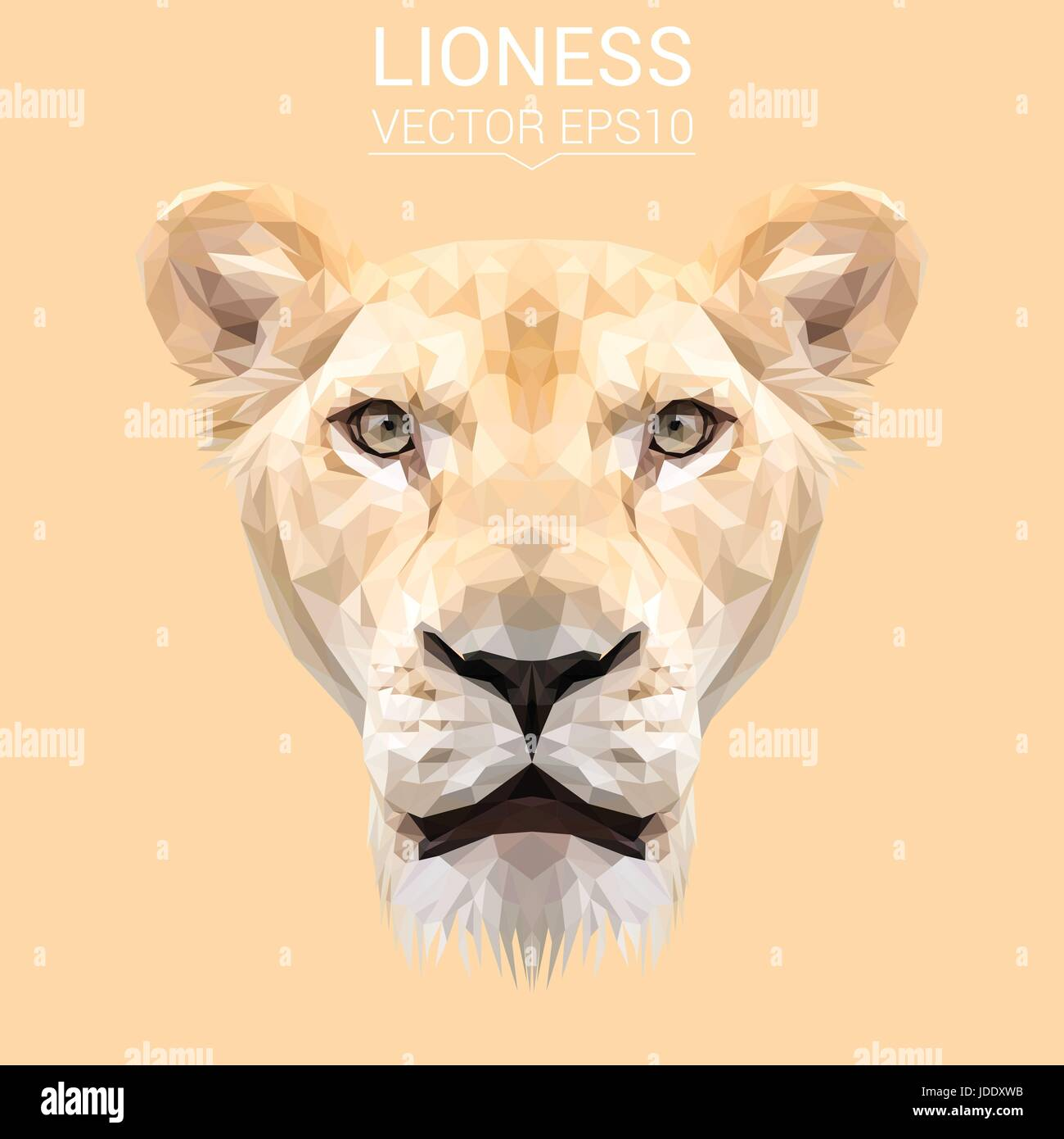 lioness face stock images royalty free images vectors.html