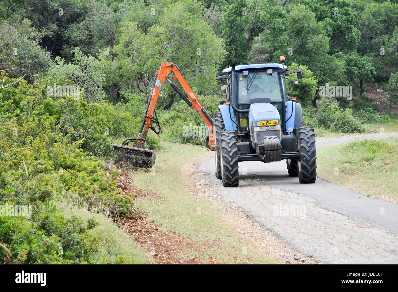 Forester clears weeds from a fire path in a orest. Photographed in Israel - Stock Image