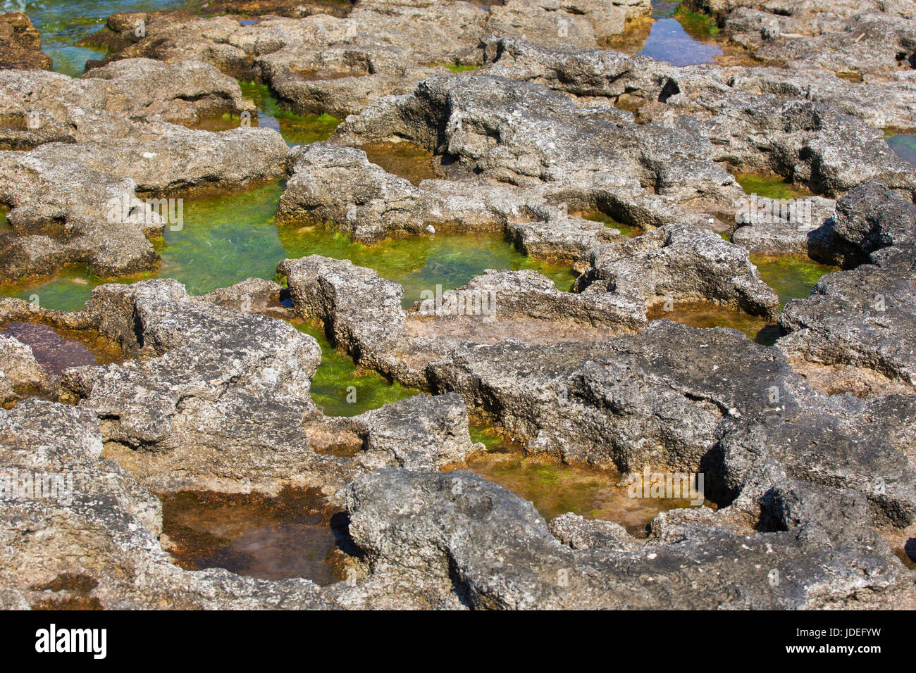 Moss in the puddle around the jagged rocks near the sea - Stock Image