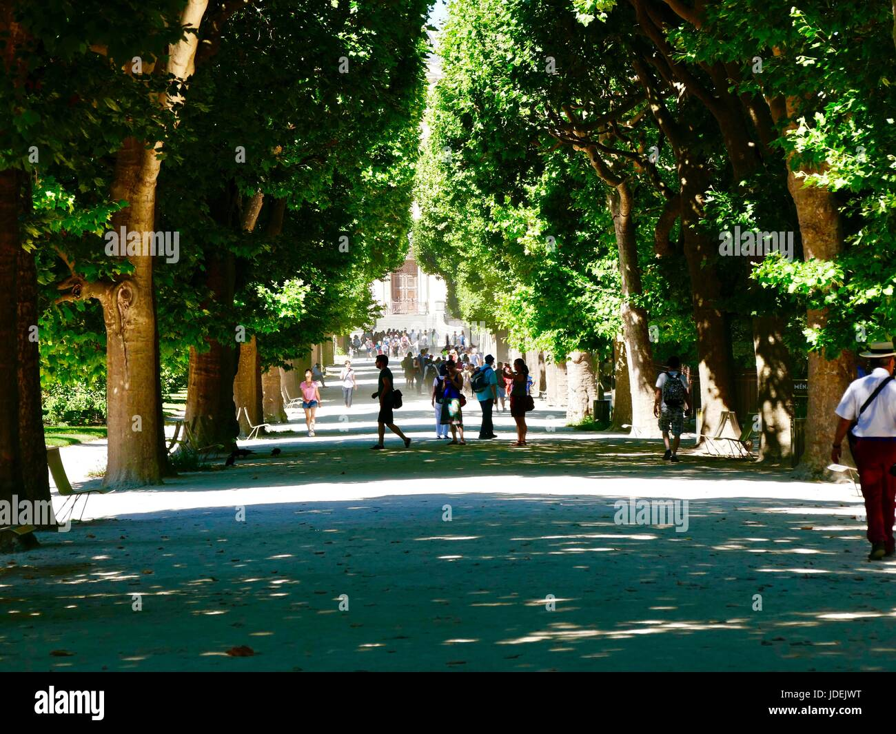 Visitors kicking up dust on path lined with leafy Plane trees on trip to Jardin des Plantes during a heat wave, - Stock Image