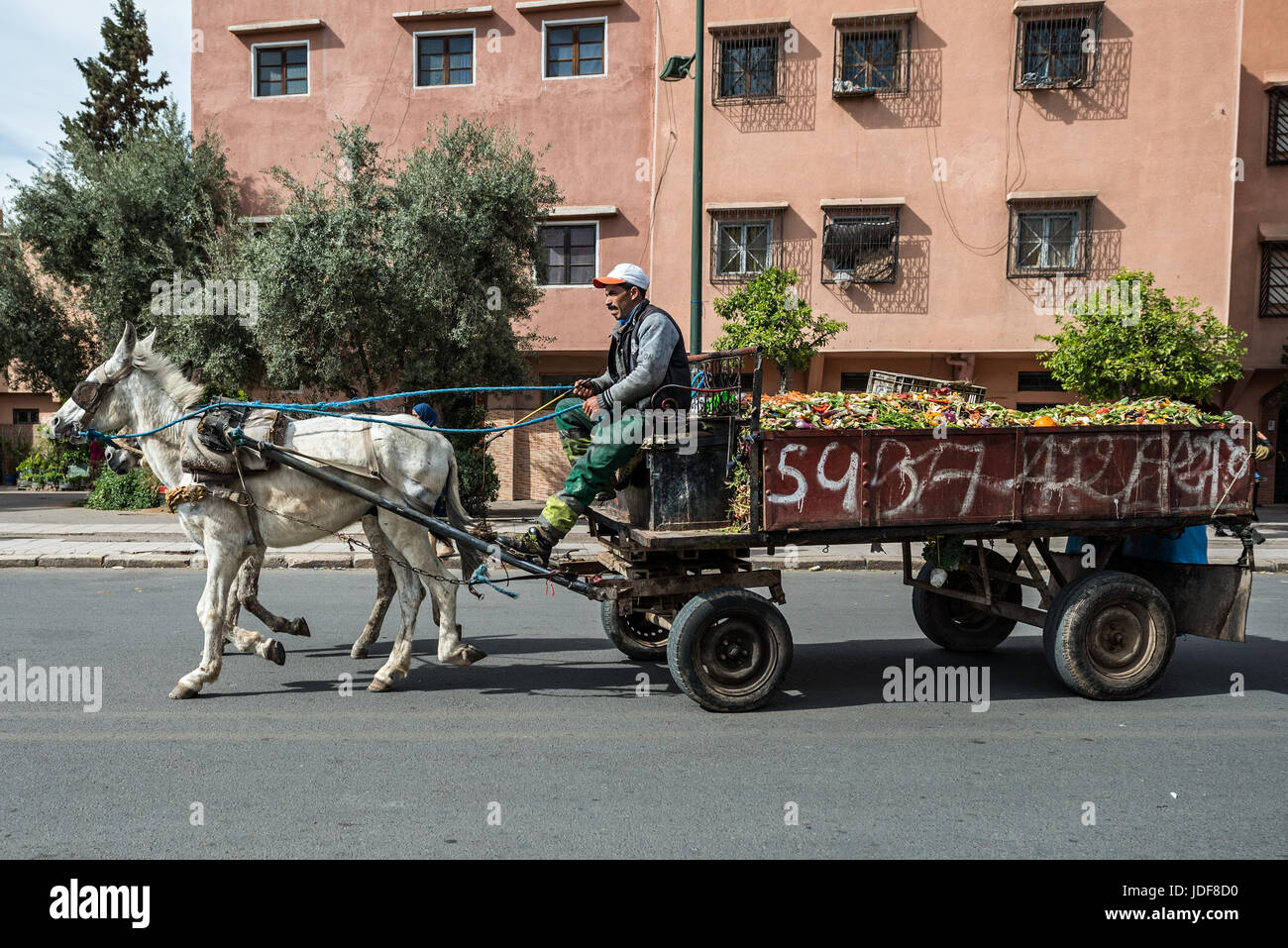 Trash cart pulled by two horses in Marrakech - Stock Image