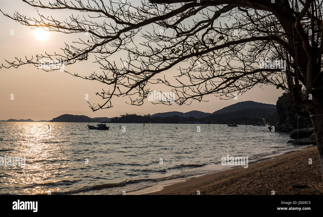 Dried branch tree on the beach sunset Ha Tien Beach - Kien Giang province Viet Nam summer vacation - Stock Image