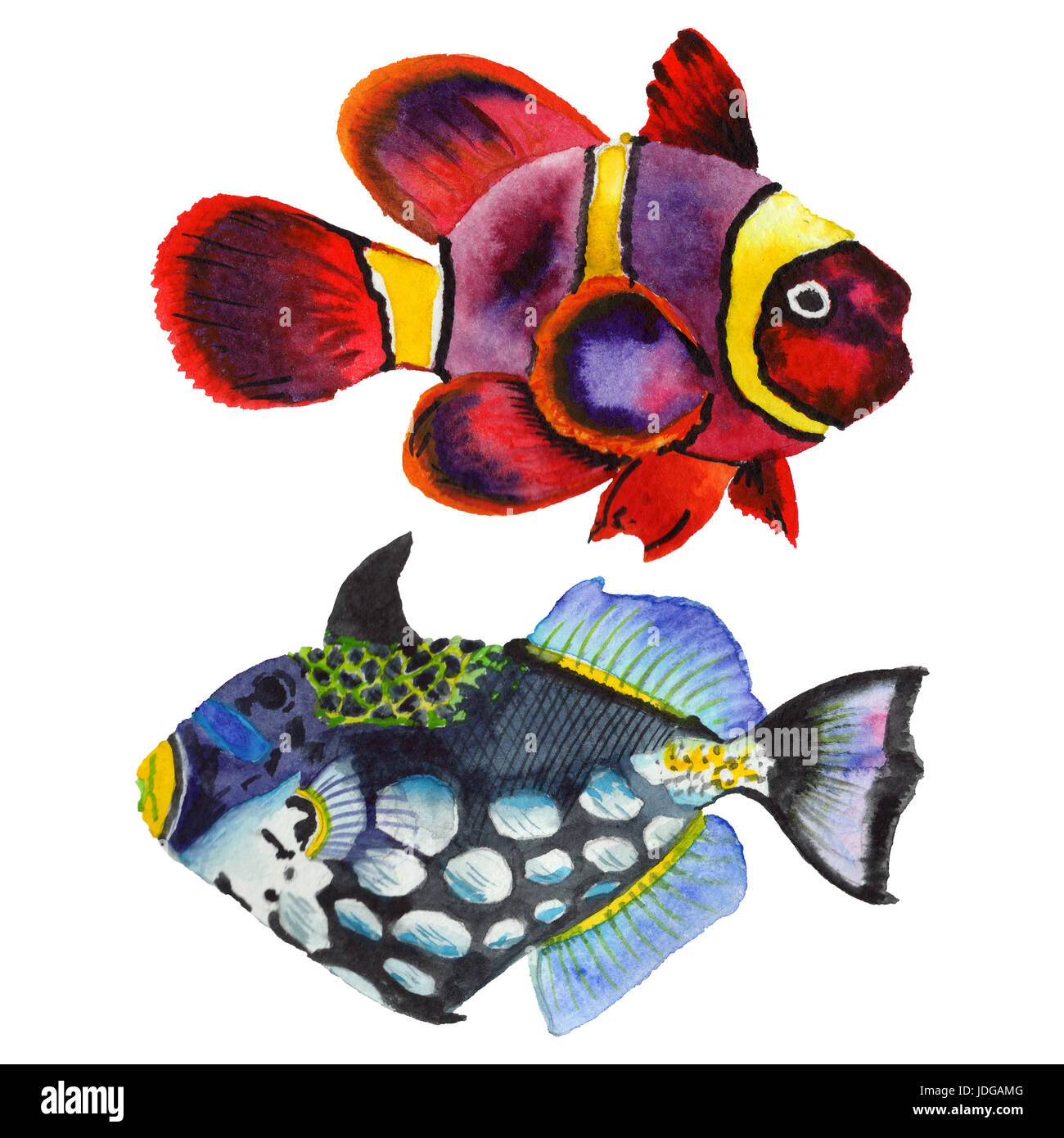 Watercolor aquatic underwater colorful tropical fish set. Red sea and exotic fishes inside. Aquarelle elements for Stock Photo