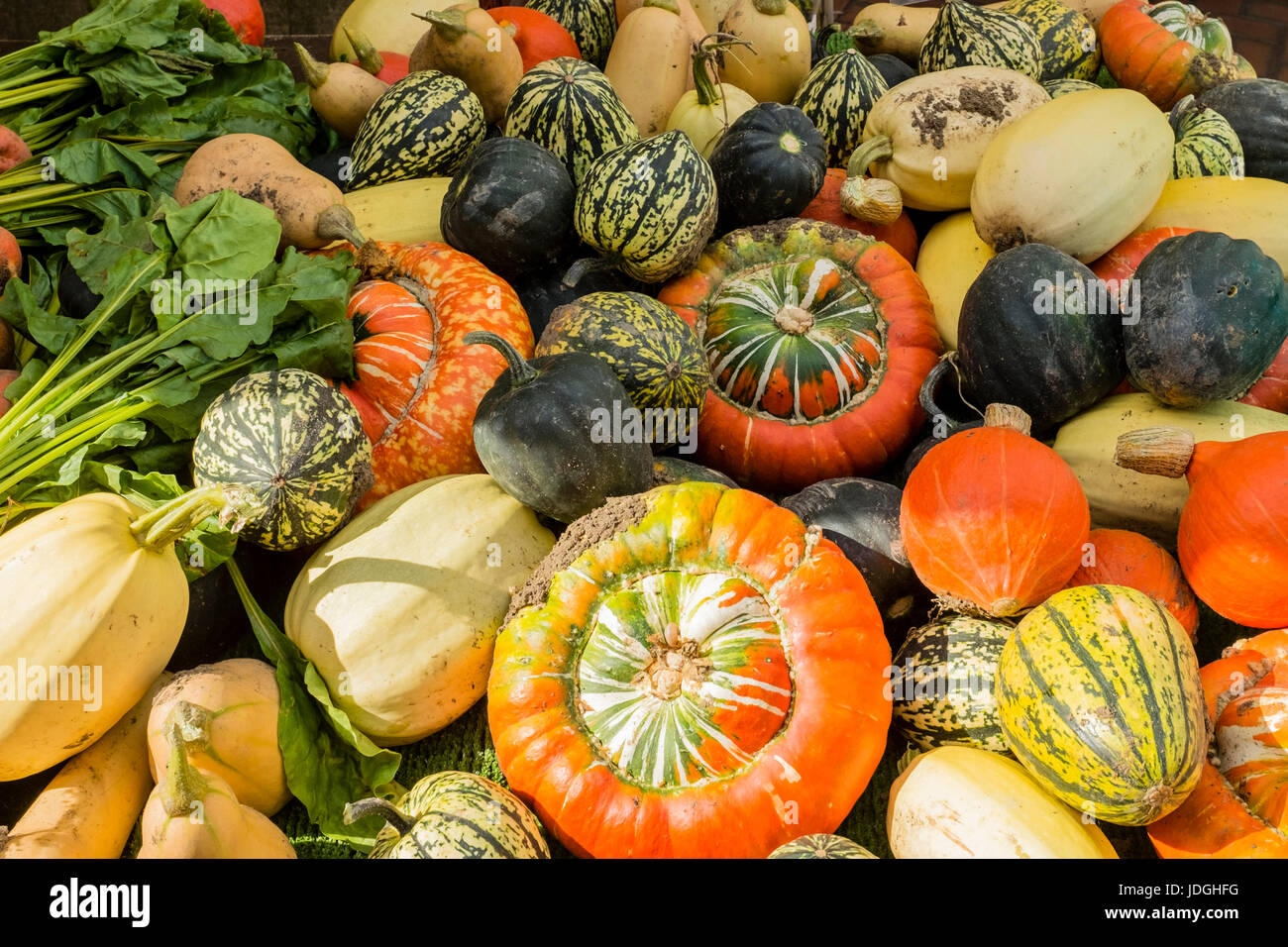 Colourful display of various vegetables, such as pumpkins and squashes - Stock Image