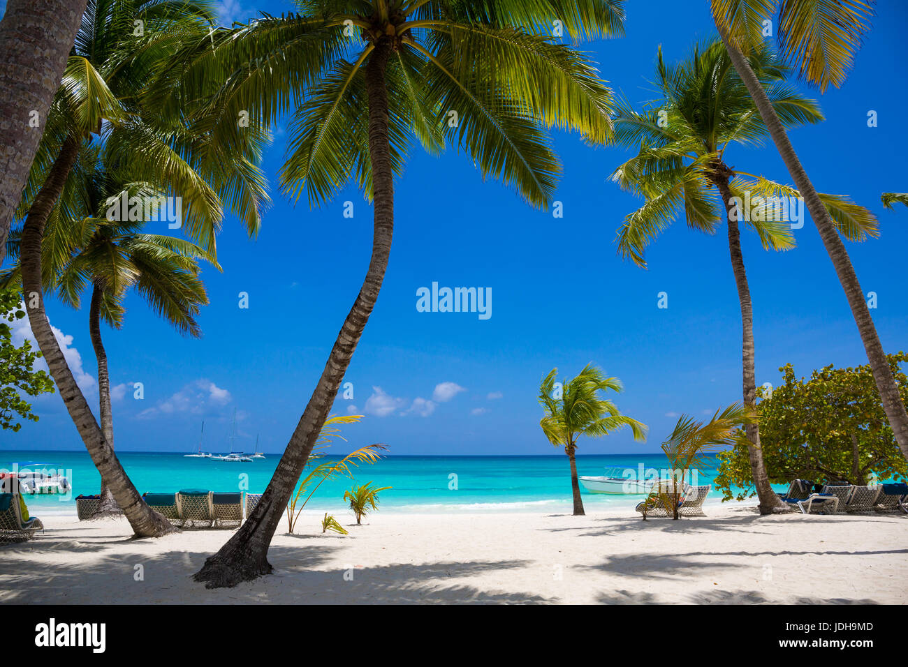 coconut palm trees with blue sky and white sand near sea - Stock Image