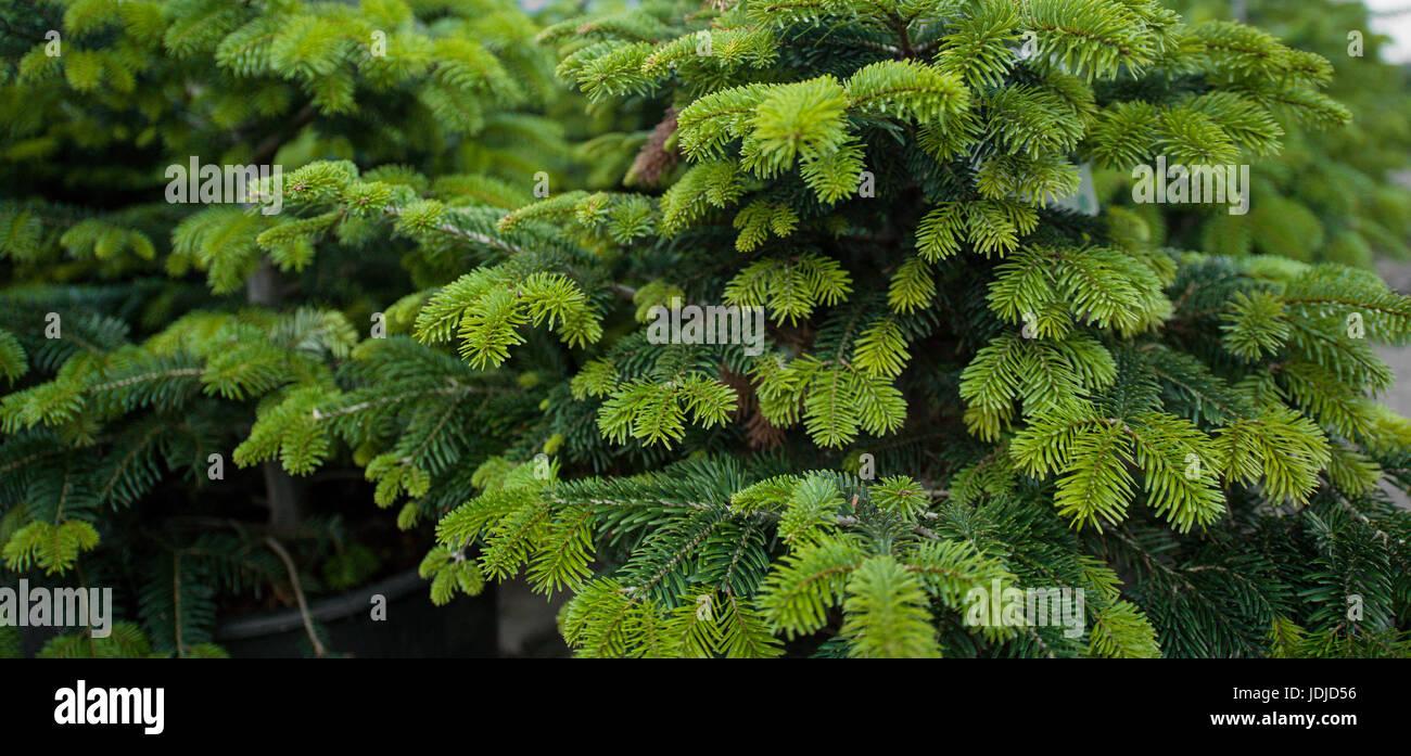 green life - Stock Image