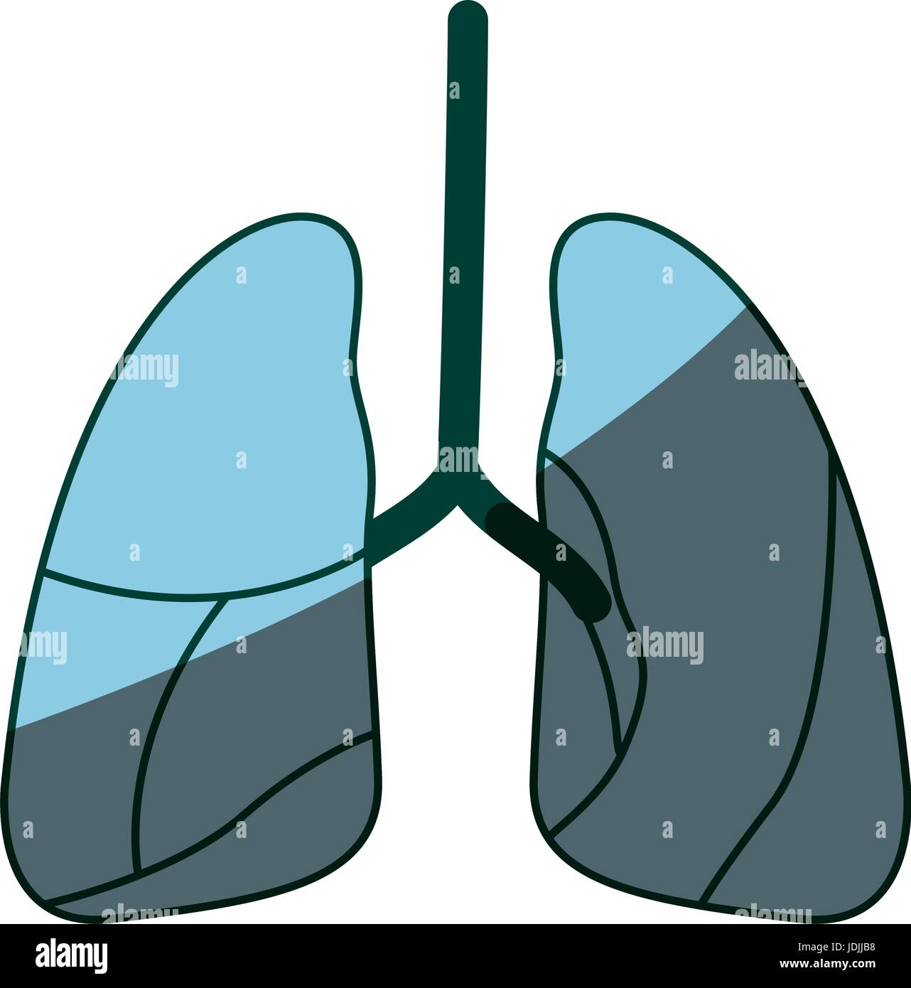 blue color shading silhouette respiratory system - Stock Image