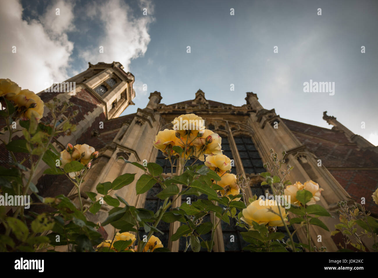 Yellow roses in front of the Lincoln's Field Library on Newman's Row in London Stock Photo