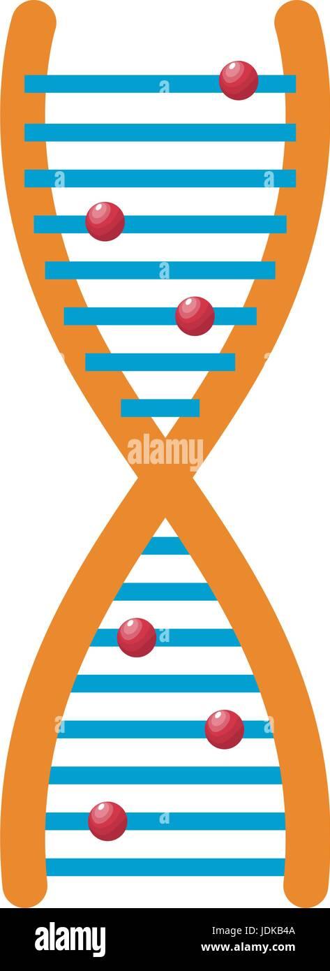 human dna and molecule symbol for medicine genetics chemistry or biology - Stock Image