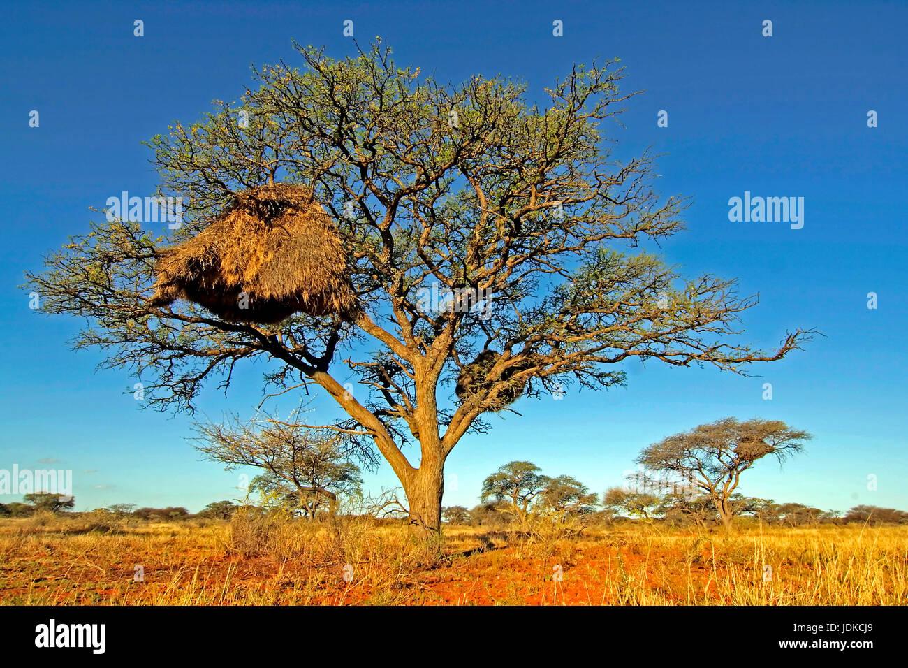 Tree in the scenery, Baum in der Landschaft - Stock Image