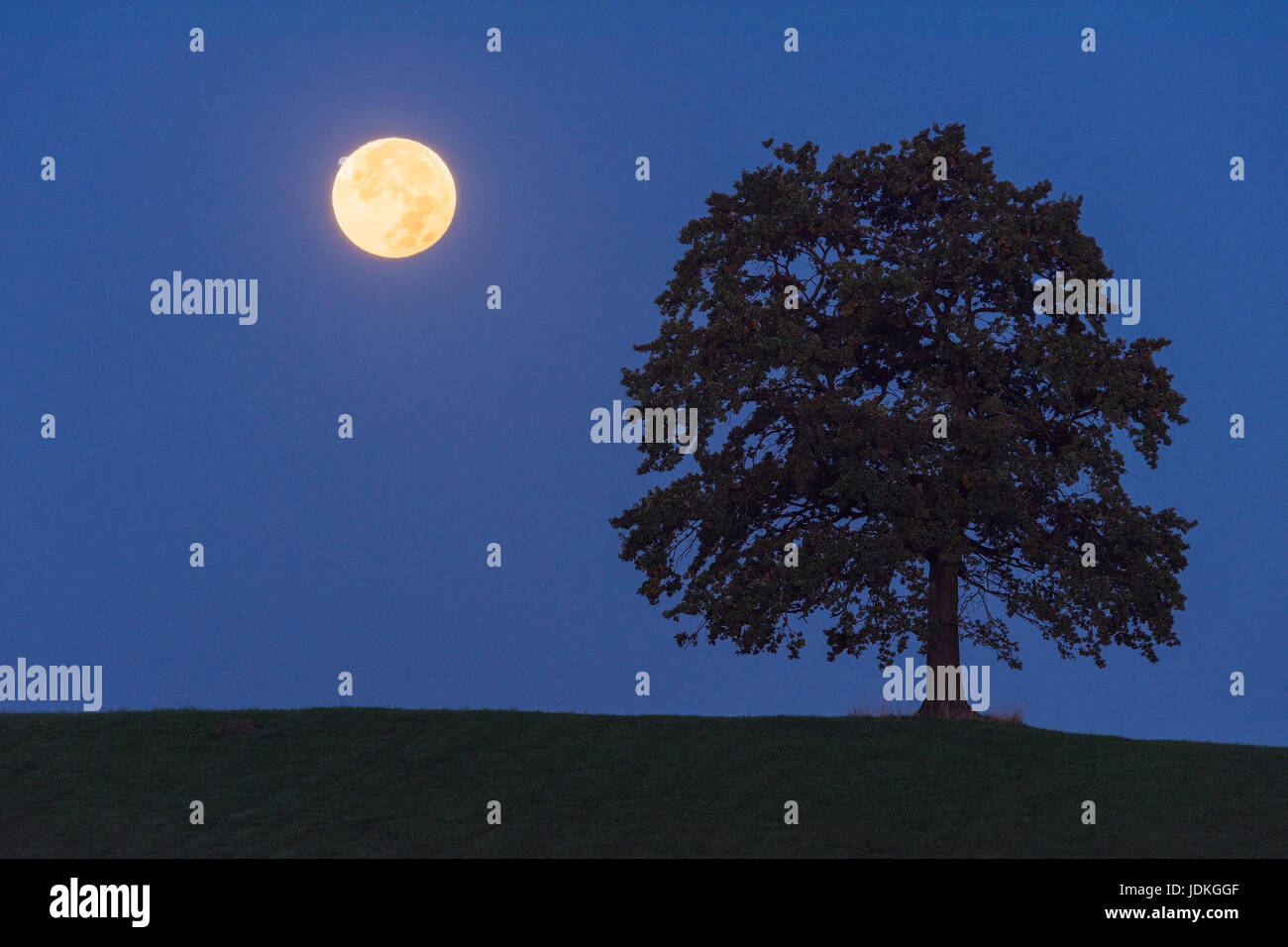 Full moon in the half-shade of the earth beside a tree, Vollmond im Halbschatten der Erde neben einem Baum - Stock Image
