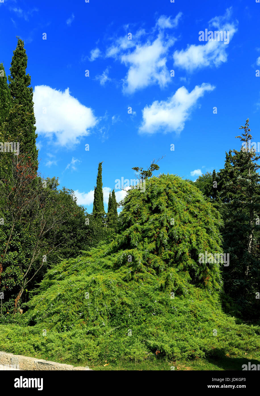 Plants, palm trees and cypress in the subtropical park - Stock Image