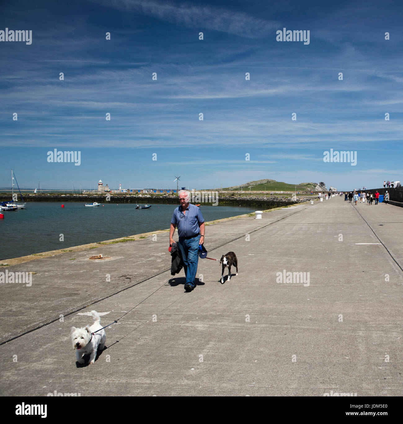Howth, Ireland. 21st June, 2017. A man walks his dogs on a hot summer day along Howth Pier in Co. Dublin, Ireland - Stock Image