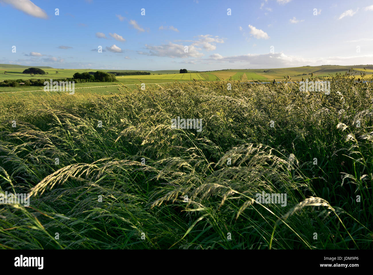 Grass blowing in the wind with Wiltshire countryside in distance Stock Photo