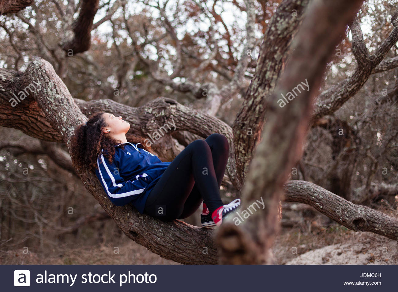 A teenage girl lies in the crook of a large oak tree on Ocracoke Island, North Carolina. - Stock Image