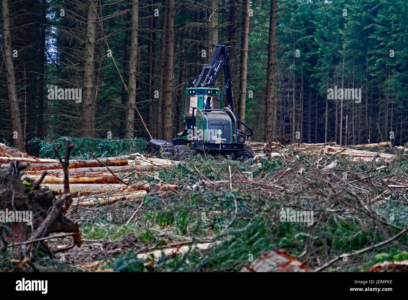 forestry - Stock Image