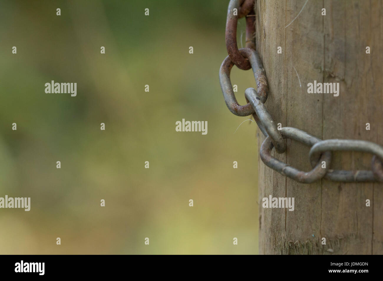 A metal chain around a wooden post with copy space. - Stock Image