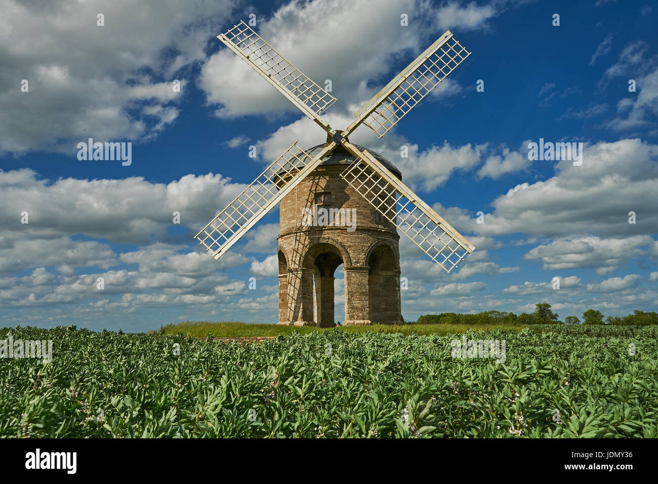 Chesterton Windmill in Warwickshire is surrounded by a crop of broad beans. - Stock Image