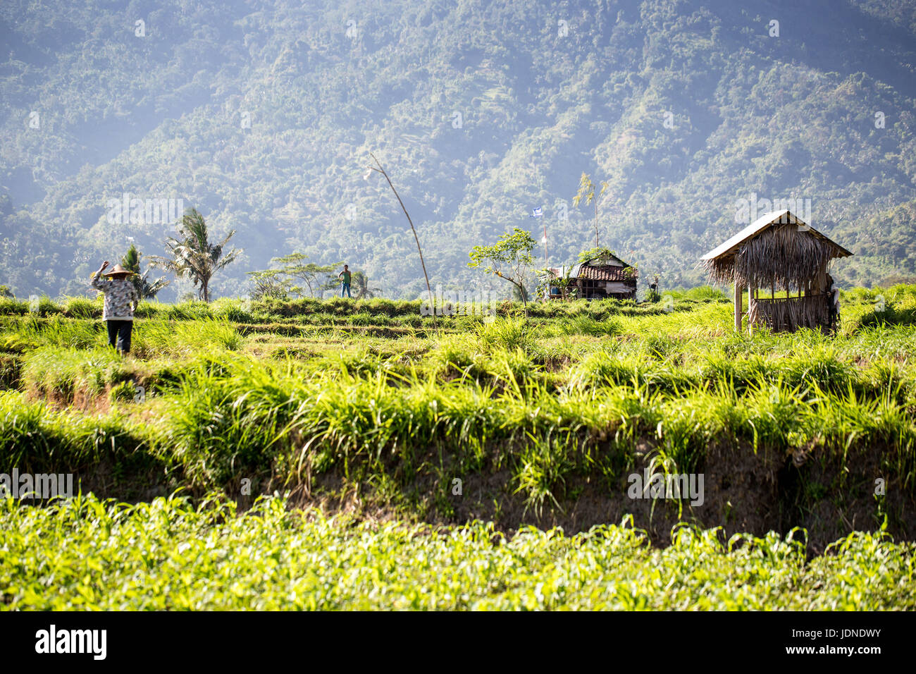 Rice terraces in northern Bali near Mount Agung with workers Stock Photo